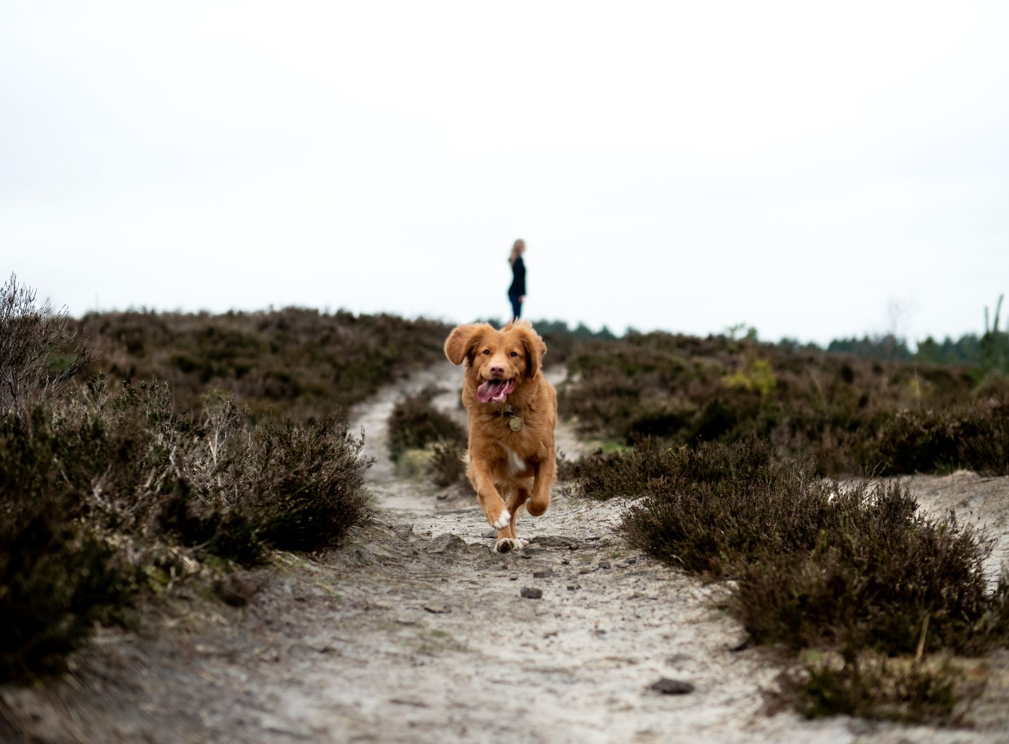 Fleetfoot Animal Physiotherapy